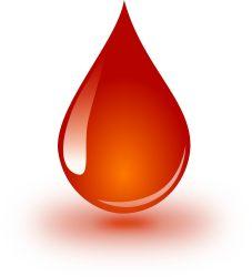 Funktioniert die Blutgruppendiät wirklich?
